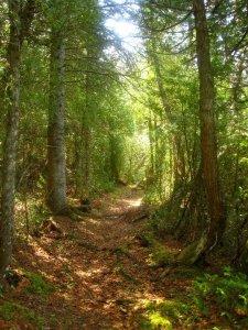 IsRo Trail